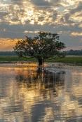 yellow-waters;south-alligator-river;kakadu-national-park;yellow-waters-boat-trip;kakadu-scenery;yell