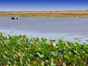 mary-river-national-park;mary-river;shady-camp;mary-river-wetland;northern-territory-wetland;wetland