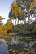 cooper-creek;wetland;arnhem-land;mount-borradaile;arnhemland;davidsons-arnhemland-safaris;davidsons-