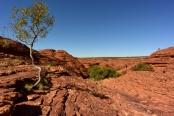 kings-canyon;kings-canyon-national-park