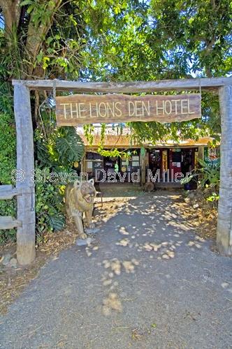 lions den hotel;lions den;helenville;bloomfield track;bloomfield track 4wd;historic hotel;historic pub;outback pub