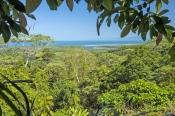 cape-tribulation;alexandra-range-lookout;daintree-national-park;wet-tropics;wet-tropics-world-herita