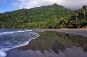 coconut-beach;cape-tribulation;cape-tribulation-beach;daintree-national-park;wet-tropics;wet-tropics