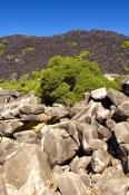 black-mountains-national-park;queensland-national-park;australian-national-park;cooktown-development