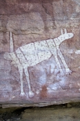 quinkan-aboriginal-rock-art;wallaroo-rock-art-shelter;rock-art-shelter;jowalbinna-rock-art-safari-ca
