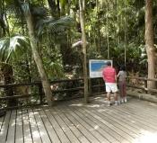 eungella-national-park;platypus;eungella;queensland-national-park;australian-national-park;interpret
