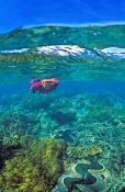 michaelmas-cay;over-under-picture;great-barrier-reef;coral-cay;coral-bed;snorkeller;snorkeler;diver;