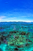 michaelmas-cay;over-under-picture;great-barrier-reef;coral-cay;coral-bed;diver;over-under-barrier-re