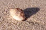 fraser-island;fraser-island-beach;shell-on-beach;fraser-island-foreshore;fraser-island-national-park