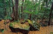 lamington-national-park;mcpherson-ranges;antarctic-beech-forest;lamington-forests;queensland-nationa