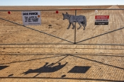 dog-fence;the-dog-fence;dog-fence-board;dog-fence-gate;muloorina;muloorina-station;oodnadatta-track;