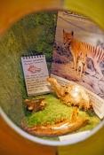 naracoorte-caves-national-park;naracoorte-caves;south-australia-national-park;world-heritage-site;au