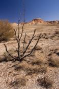 painted-desert;pedrika-desert;arckaringa;oodnadatta-track;outback-south-australia;painted-desert-aus
