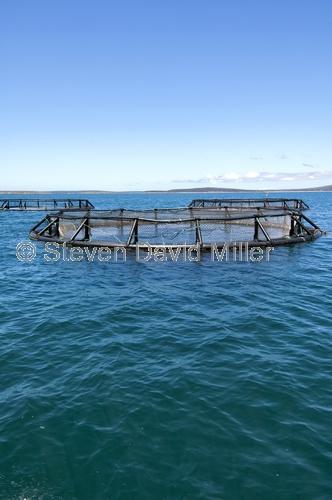 port lincoln;fish farming;fish pens;tuna farming;aquaculture. eyre peninsula;south australia;southern ocean fish pen;tuna pen