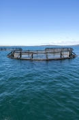 port-lincoln;fish-farming;fish-pens;tuna-farming;aquaculture-eyre-peninsula;south-australia;southern