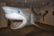 great-white-shark-replica;streaky-bay;streaky-bay-information-centre