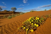 innamincka-regional-reserve;innamincka;strzelecki-track;strzelecki-desert;south-australia-outback-tr