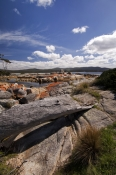 binalong-bay;bay-of-fires;granite-rocks;orange-lichen-on-granite-rocks;northeast-tasmania;tasmania;t