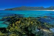 wineglass-bay;freycinet-national-park;seaweed;tasmania;tassie;tasmanian-national-park;australian-nat