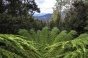 lake-dobson-road;mount-field-national-park;tasmania;mt-field-national-park;tassie;tasmanian-national
