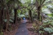 russell-falls;falls;mount-field-national-park;mt-field-national-park;tasmania;tassie;temperate-rainf