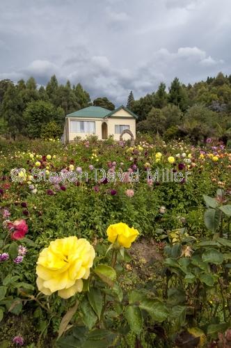 tasmania;tassie;tassie house;tassie garden;tasmanian house;tasmanian garden;tasmania roadside scenery