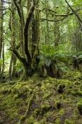 Florentine Valley, Styx Forest & Creepy Crawly