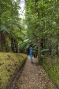 styx-forest;styx-forest-drive;styx-big-tree-reserve;forestry-tasmania;forestry-tasmania-drives;fores