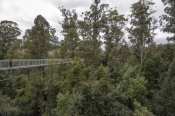 arve-forest;geeveston;tahune;tahune-forest-air-walk;tahune-forest-airwalk;forestry-tasmania;tasmania