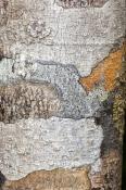 dismal-swamp;the-tarkine;tarkine;blackwood-sinkole;tarkine-sinkholes;northwest-tasmania;tasmainia;ta