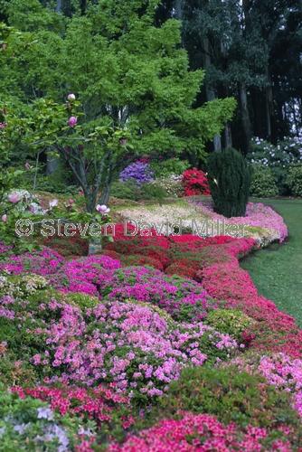 national rhododendron gardens;rhododendron gardens;the dandenongs;dandenongs;victorian gardens;rhododendrons