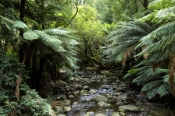 badger-creek;yarra-ranges;yarra-ranges-national-park;healesville;victorian-national-park;australian-