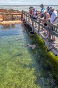 ocean-park-aquarium;denham;denham-aquarium;shark-bay;money-mia;sharks-in-captivity;peron-peninsula
