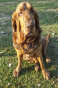 hound-dog;home-valley-station;gibb-river-road;the-kimberley;kimberley;far-north-western-australia;st