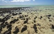 hamelin-pool;hamelin-pool-marine-nature-reserve;shark-bay;stromatolites;early-forms-of-life