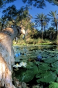chinderwarriner-pool;millstream;millstream-homestead;millstream-chichester-national-park;the-pilbarr