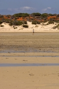monkey-mia;shark-bay;monkey-mia-beach;peron-peninsula