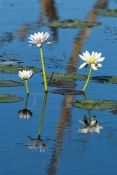 parry-lagoons-nature-reserve;parry-lagoons-nature-preserve;ramsar-wetland;ramsar-wetland-of-internat