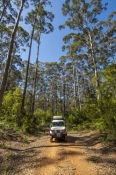 big-brook-arboretum;pemberton-forest-drive;pemberton;western-australia-forest-drive;4wd-pemberton-fo