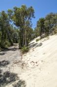 yeagarup-lake;pemberton;dentrecasteaux-national-park;yeagarup-sand-dunes;yeagarup-dune-system;shifti
