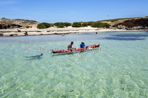 penguin island;rockingham;kayaking