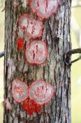corkscrew-swamp-sanctuary;bald-cypress-tree;cypress-tree;cypress-swamp;lychen;lychen-colony;algae-an