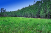 corkscrew-swamp-sanctuary-picture;corkscrew-swamp-sanctuary;cypress-swamp;wet-prairie;cypress-strand