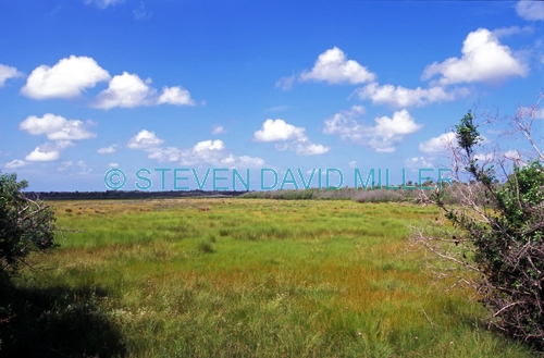 collier seminole state park;florida state park;state park southwest florida;salt marsh;marsh;collier seminole state park river