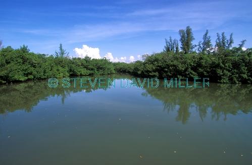 collier seminole state park;florida state park;state park southwest florida;riverine mangroves;blackwater river;collier seminole state park river