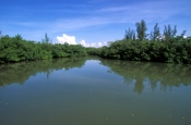 collier-seminole-state-park;florida-state-park;state-park-southwest-florida;riverine-mangroves;black