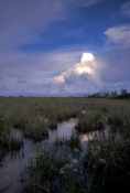 pahaokee-overlook;shark-river;shark-river-slough;freshwater-slough;everglades-national-park;everglad