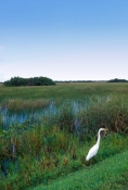 shark-valley;everglades-national-park;florida-national-park;freshwater-slough