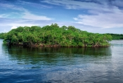 whitewater-bay;wilderness-waterway-canoe-trail;mangroves;mangrove-island;everglades;everglades-canoe