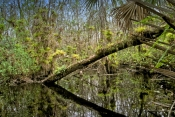 fakahatchee-stranch;fakahatchee-strand-state-preserve;big-cypress;big-cypress-bend;big-cypress-basin